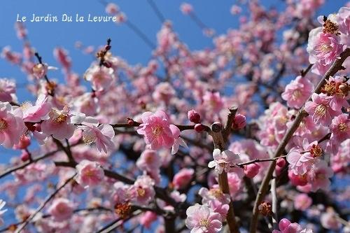 季節感あること_f0329586_12074041.jpg