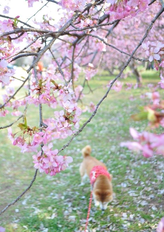 春ですよ!_a0126590_21440627.jpg