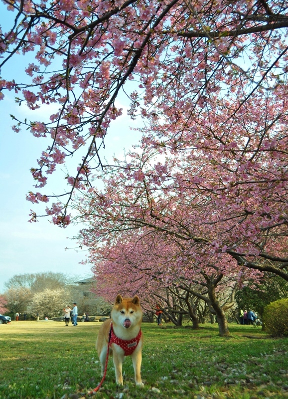 春ですよ!_a0126590_21442178.jpg