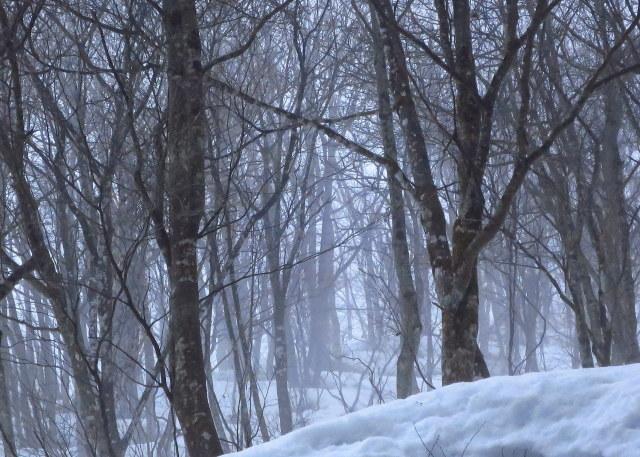 融雪霧_a0214206_21103249.jpg