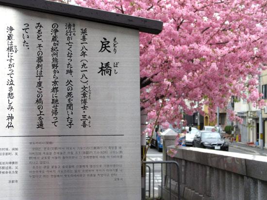 16桜たより1 一条戻り橋_e0048413_1836229.jpg