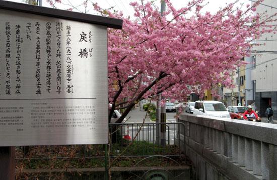 16桜たより1 一条戻り橋_e0048413_18363148.jpg