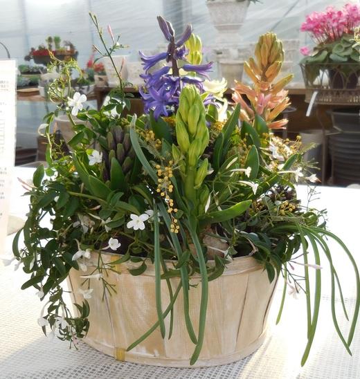 窓辺で楽しむ春球根の香りの寄せ植え_f0139333_23475858.jpg