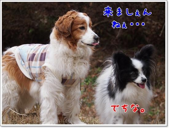 d0013149_00051846.jpg