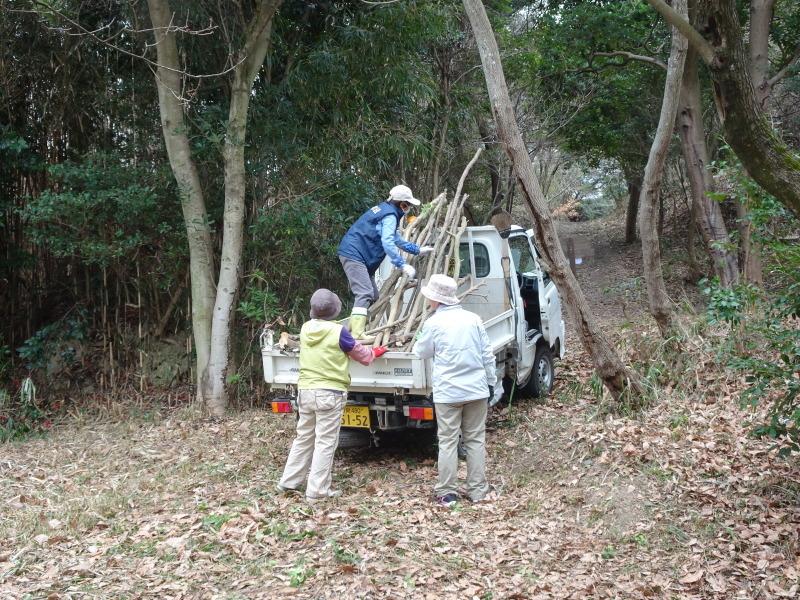 ヤブツバキの景観確保のための盗伐が続いている・・・うみべの森_c0108460_00000048.jpg
