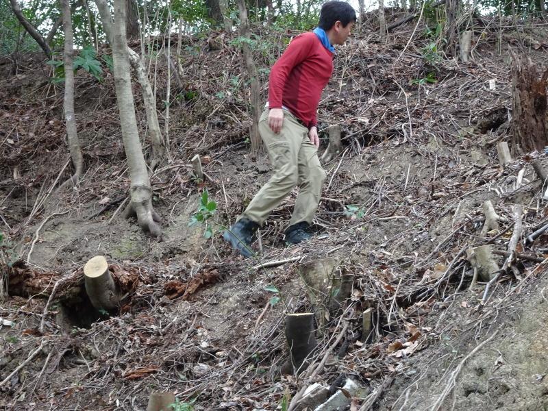 ヤブツバキの景観確保のための盗伐が続いている・・・うみべの森_c0108460_00084376.jpg
