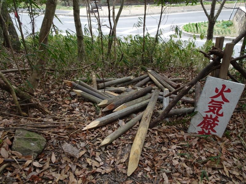 ヤブツバキの景観確保のための盗伐が続いている・・・うみべの森_c0108460_00084543.jpg