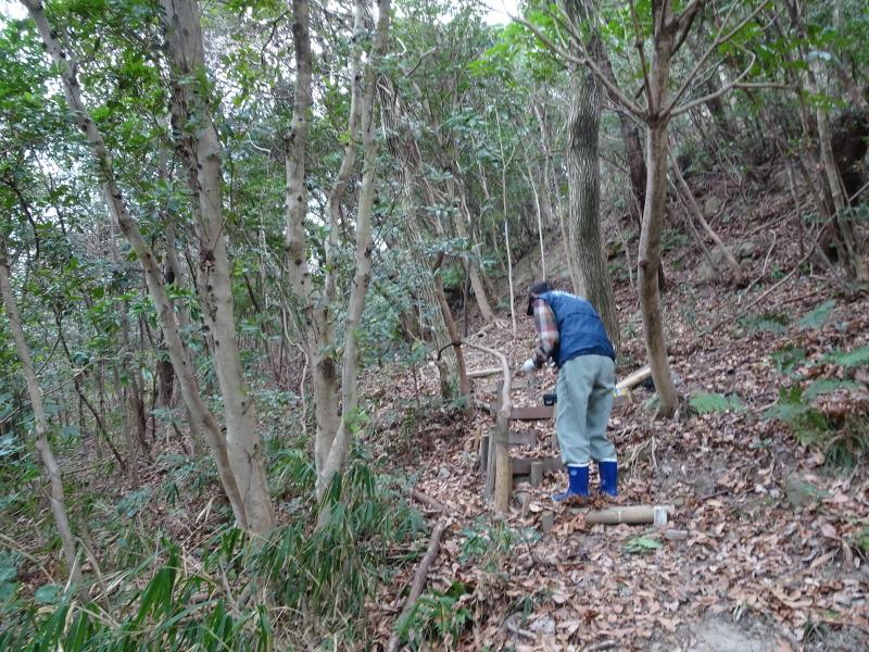 ヤブツバキの景観確保のための盗伐が続いている・・・うみべの森_c0108460_00084874.jpg