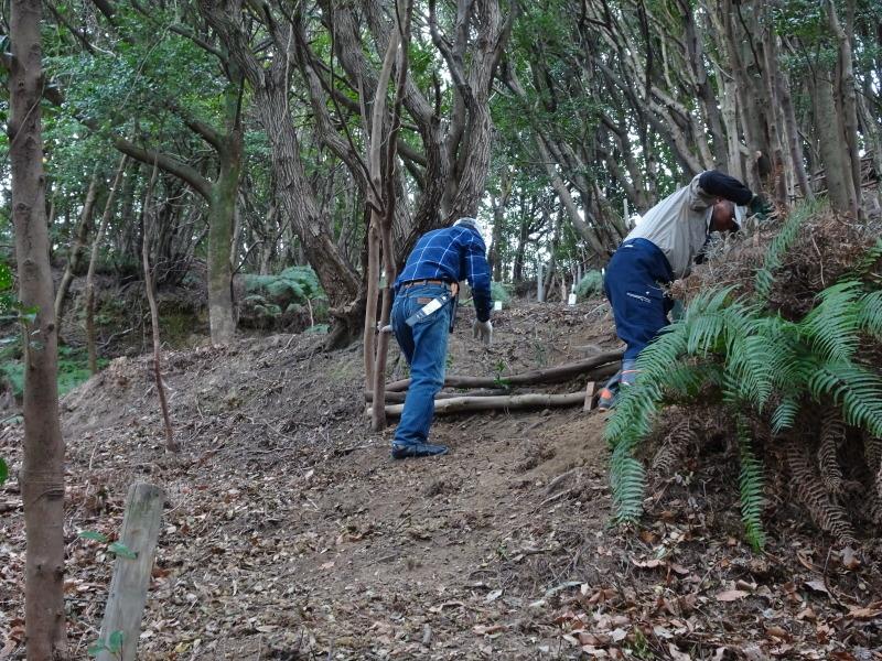 ヤブツバキの景観確保のための盗伐が続いている・・・うみべの森_c0108460_00085053.jpg