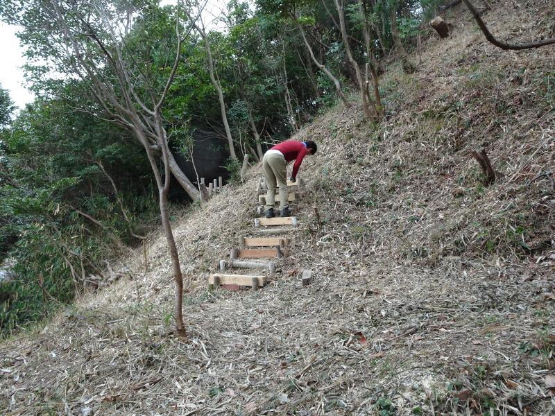 ヤブツバキの景観確保のための盗伐が続いている・・・うみべの森_c0108460_00103176.jpg