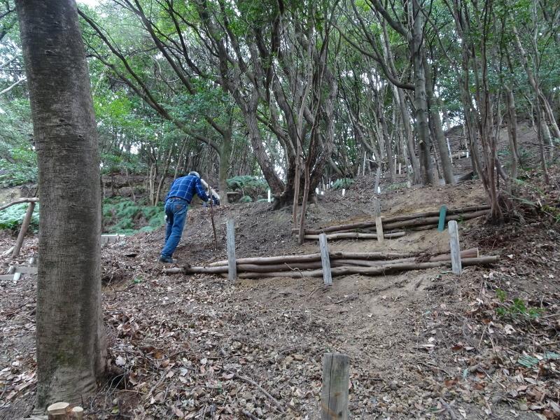ヤブツバキの景観確保のための盗伐が続いている・・・うみべの森_c0108460_00103853.jpg
