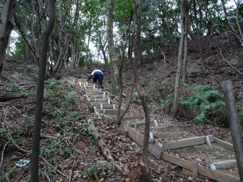ヤブツバキの景観確保のための盗伐が続いている・・・うみべの森_c0108460_00104097.jpg