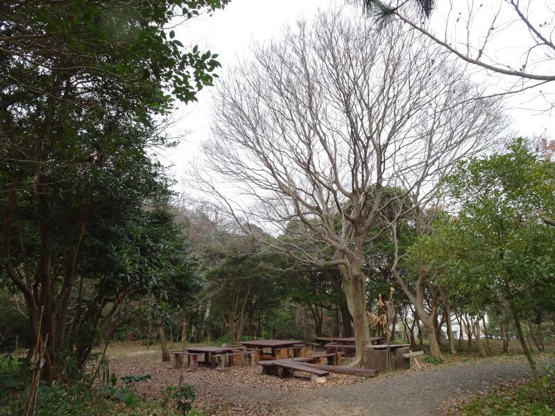 平成28年3月度運営委員会・・・うみべの森を育てる会_c0108460_21032264.jpg