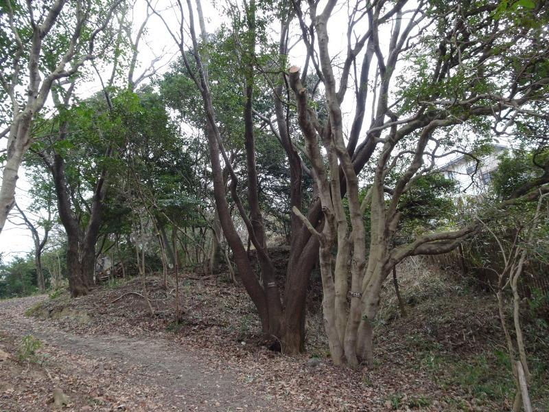 平成28年3月度運営委員会・・・うみべの森を育てる会_c0108460_21032678.jpg