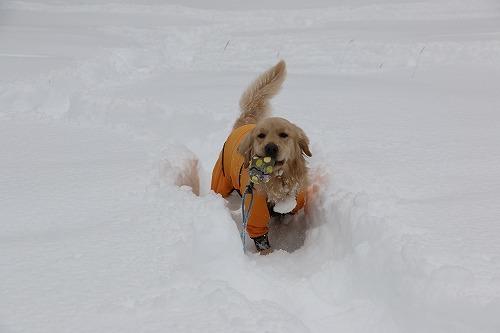1月の雪遊び_c0172184_14312374.jpg