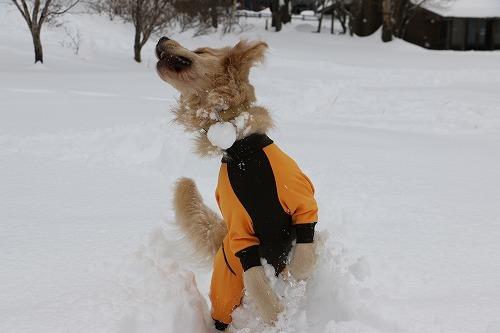 1月の雪遊び_c0172184_14314499.jpg