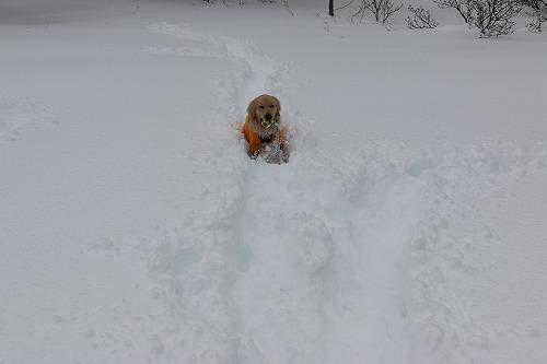 1月の雪遊び_c0172184_14315621.jpg