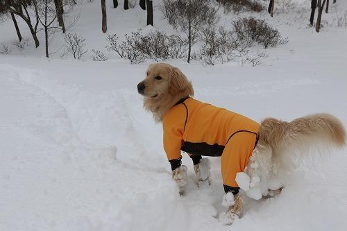 1月の雪遊び_c0172184_14322932.jpg