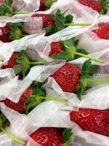 苺の季節はショートケーキ_b0210699_23122599.jpg