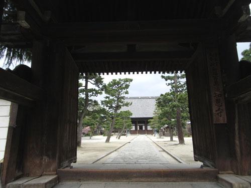 16さくらだより3 知恩寺のフジ桜_e0048413_161426.jpg