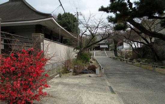 16さくらだより3 知恩寺のフジ桜_e0048413_1615386.jpg