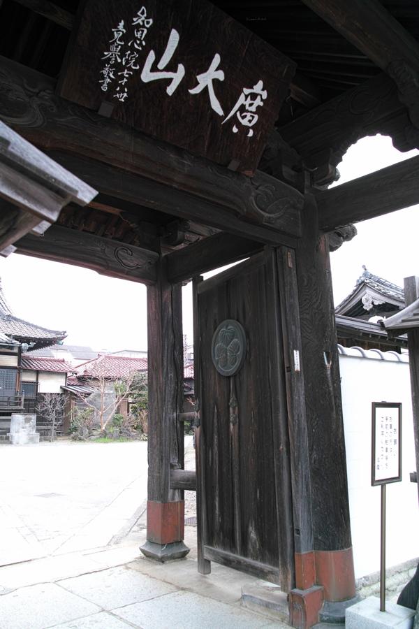 河津桜が満開の松戸・坂川_c0223825_01392934.jpg