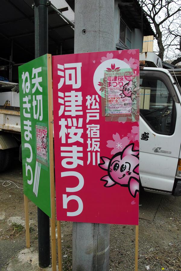 河津桜が満開の松戸・坂川_c0223825_01461841.jpg