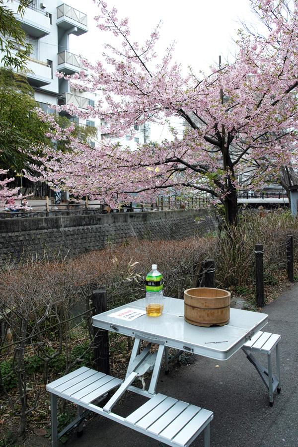 河津桜が満開の松戸・坂川_c0223825_01485502.jpg