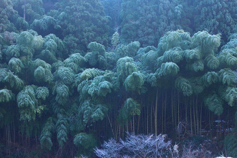 霜降る朝_c0067040_22304642.jpg