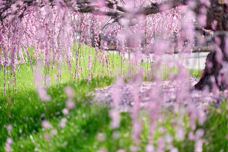 鈴鹿の森庭園_e0170058_18455341.jpg