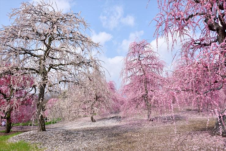 鈴鹿の森庭園_e0170058_184887.jpg