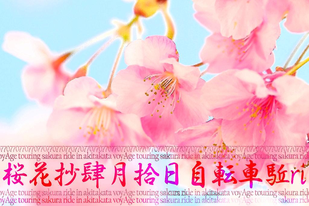 4月10日(日)「voyAge touring \'桜花抄\' sakura ride in 安芸高田 077」_c0351373_17533886.jpg