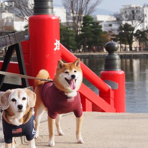 初めての松本城でした_a0104074_20255073.jpg