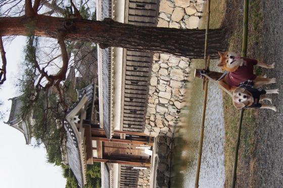 初めての松本城でした_a0104074_2040265.jpg