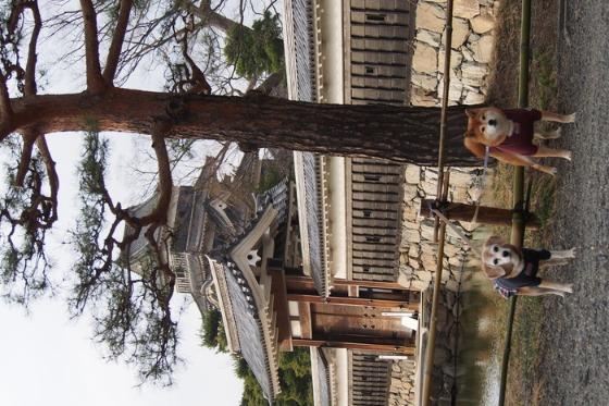 初めての松本城でした_a0104074_20424482.jpg