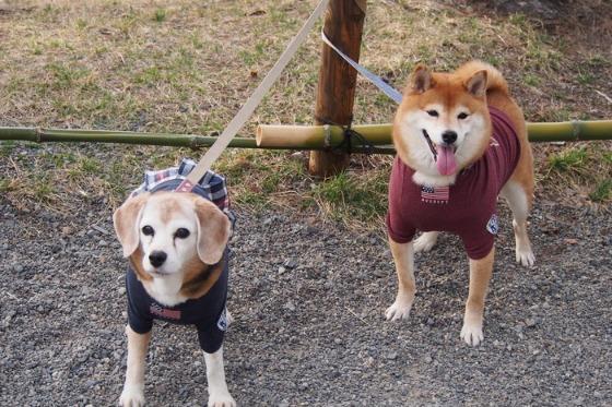 初めての松本城でした_a0104074_20431516.jpg