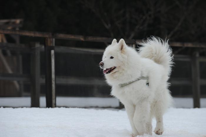 第9回 雪中オフ 1_a0049296_18134528.jpg