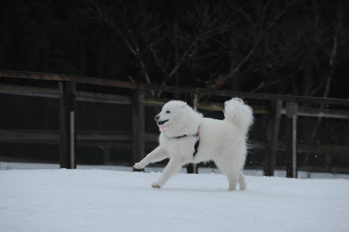第9回 雪中オフ 1_a0049296_18162154.jpg