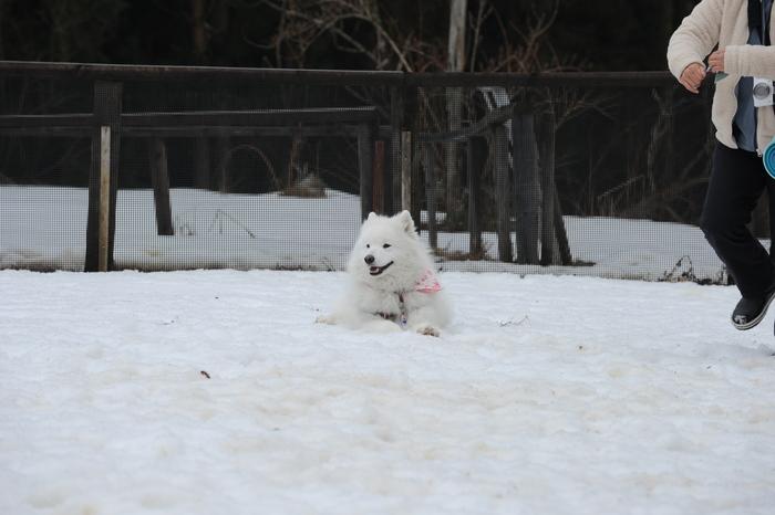 第9回 雪中オフ 1_a0049296_1820338.jpg