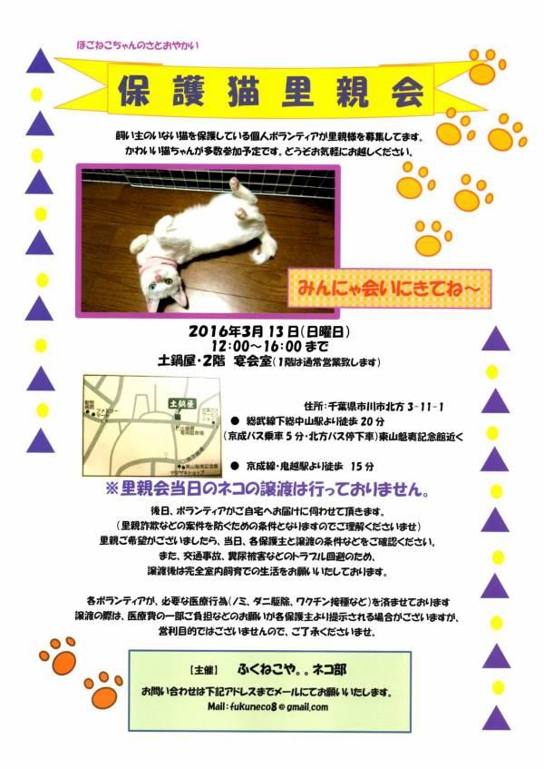 3/13 市川猫里親会のお知らせ_f0242002_13204336.jpg