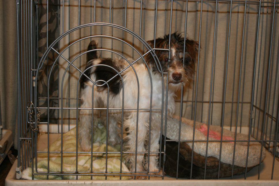 放棄された小型犬たち(3/5)_f0242002_1455166.jpg