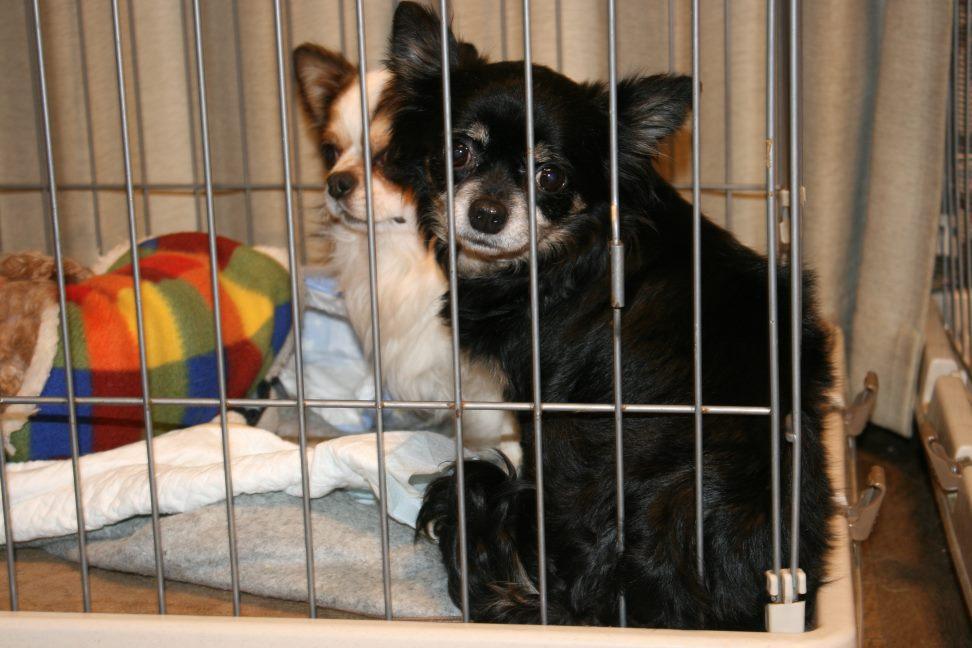 放棄された小型犬たち(3/5)_f0242002_146274.jpg