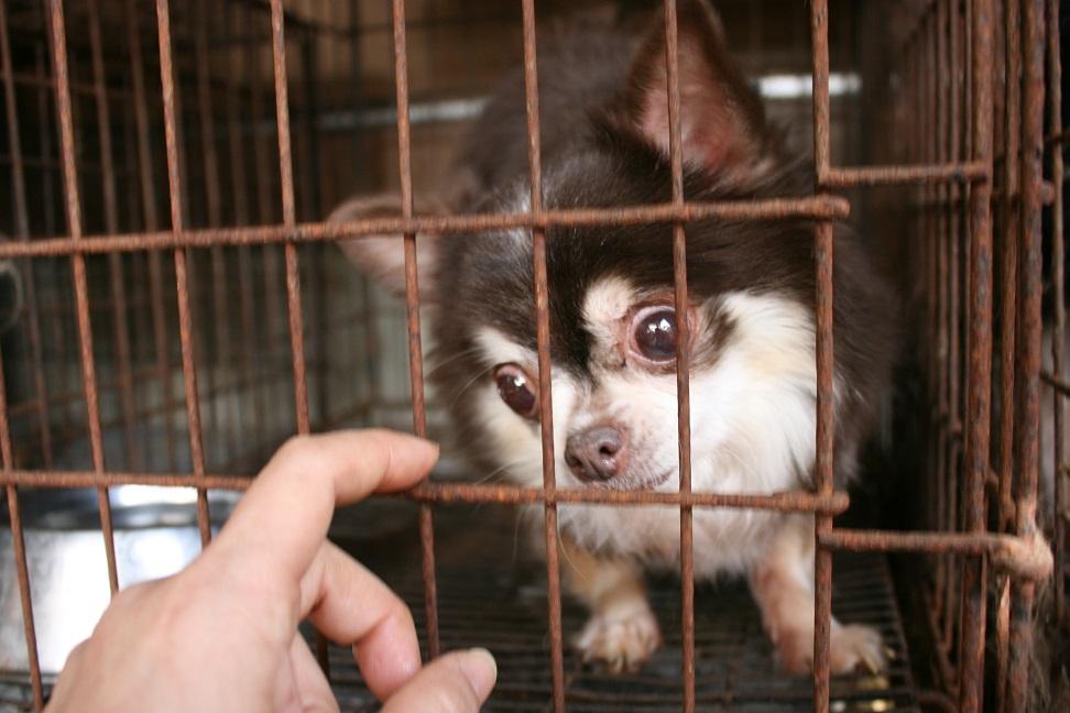 放棄された小型犬たち(3/5)_f0242002_22281999.jpg