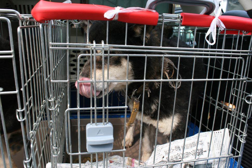 放棄された小型犬たち(3/5)_f0242002_22294745.jpg