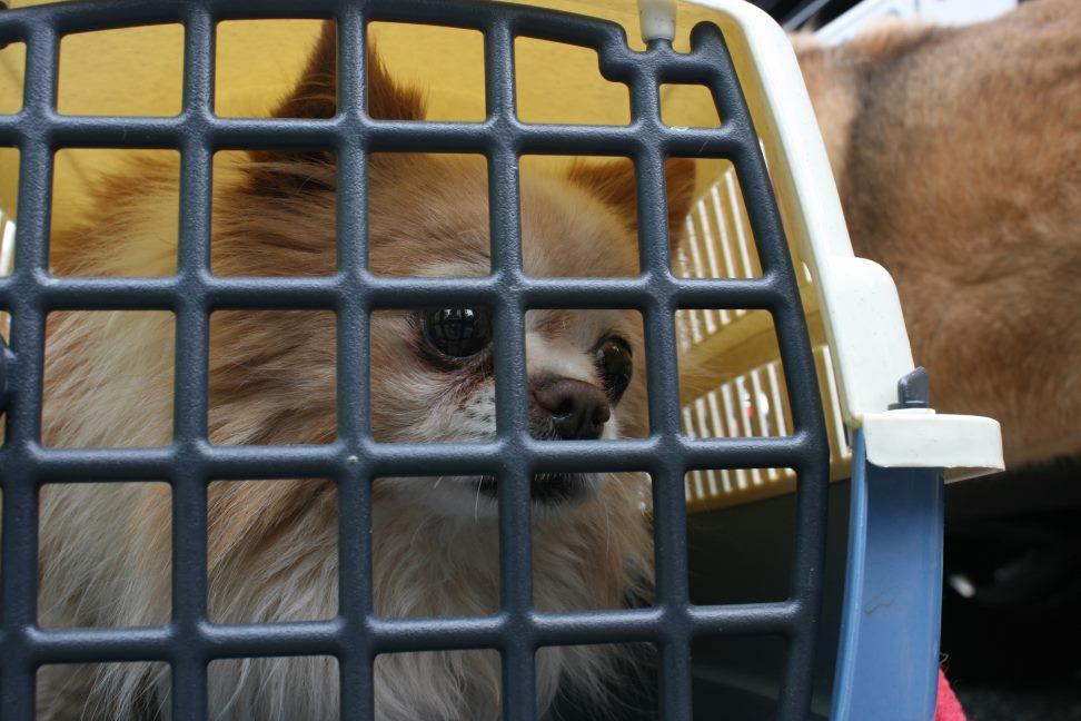放棄された小型犬たち(3/5)_f0242002_22295615.jpg