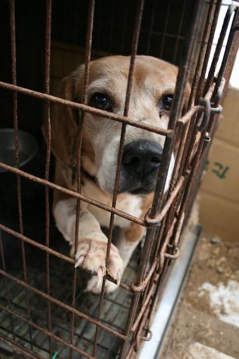 放棄された小型犬たち(3/5)_f0242002_22305798.jpg