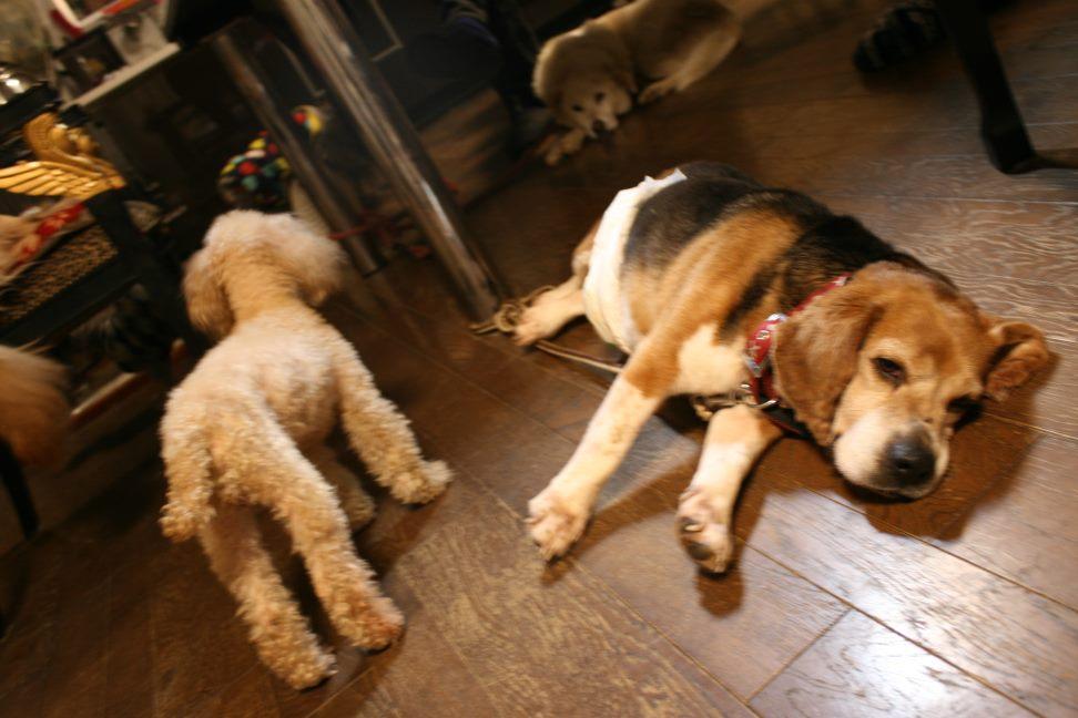 放棄された小型犬たち(3/5)_f0242002_22334916.jpg