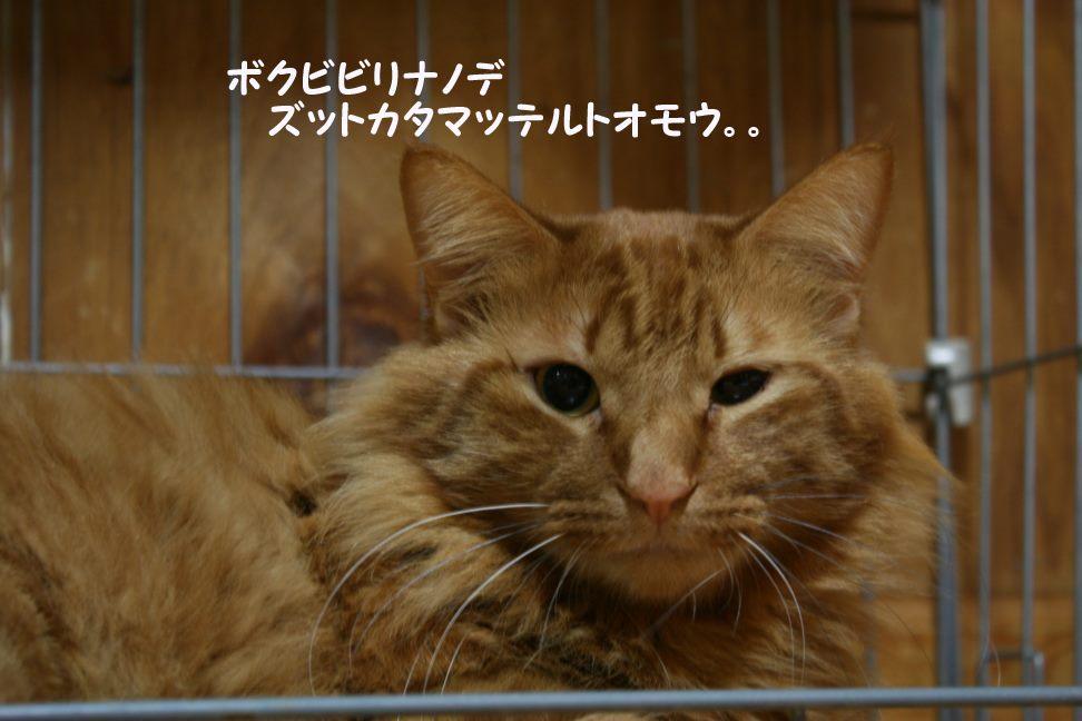 3/13 市川猫里親会のお知らせ_f0242002_22521643.jpg