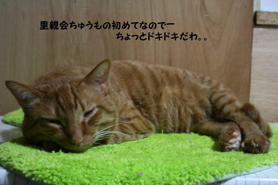 3/13 市川猫里親会のお知らせ_f0242002_2252333.jpg