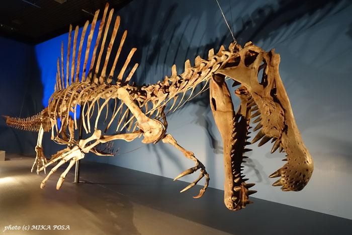 恐竜博2016 スタート!_b0164803_19115387.jpg